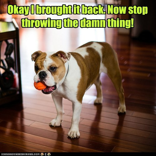 fetch annoyed dogs bulldog ball - 6965197568