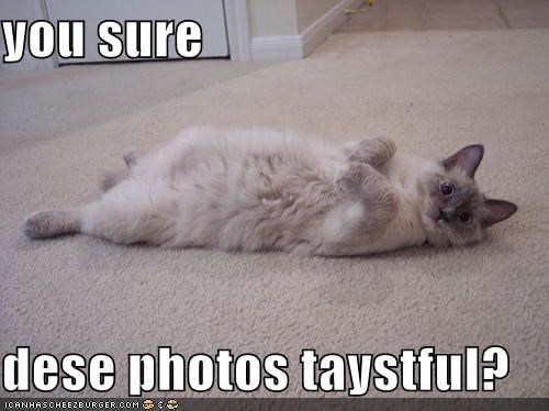 you sure  dese photos taystful?