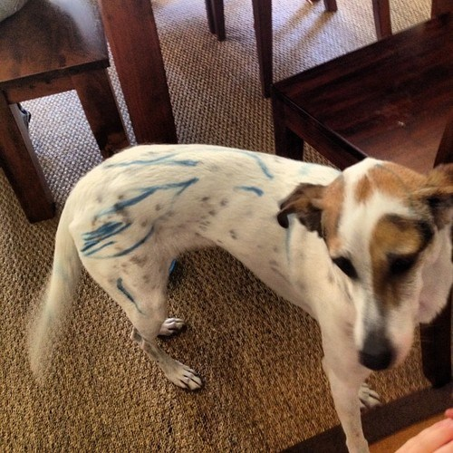 markers bad kids messy kids dogs - 6965632768
