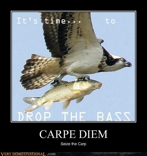 wrong bass fish carp - 6965681408