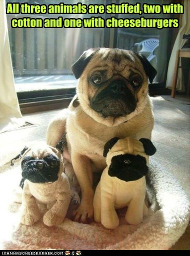 dogs stuffed animals pugs cheeseburgers food