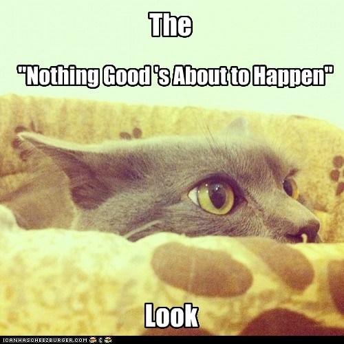 cat plot close up look mischief funny - 6966273280
