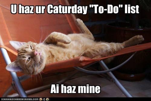 """U haz ur Caturday """"To-Do"""" list Ai haz mine"""