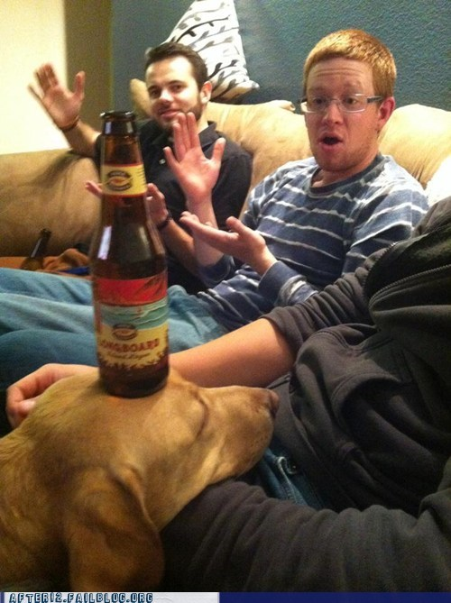 beer,miracle,wizard,dogs
