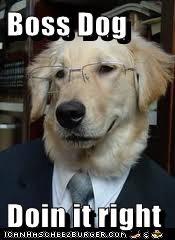 Boss Dog  Doin it right
