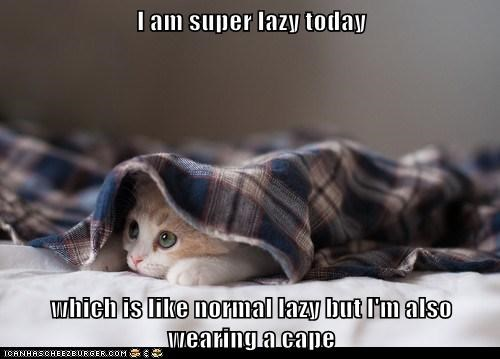 cat,lazy,kitten,funny