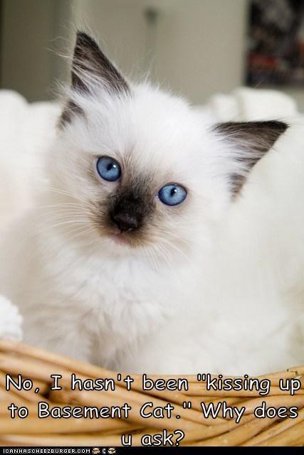 basement cat basement kitten kitty funny - 6966931968
