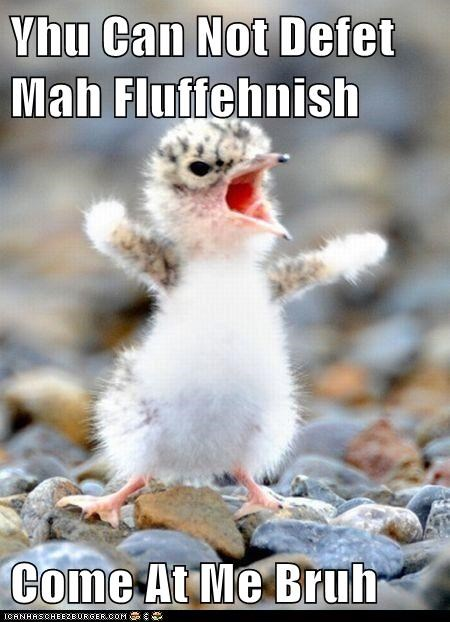 Yhu Can Not Defet Mah Fluffehnish Come At Me Bruh