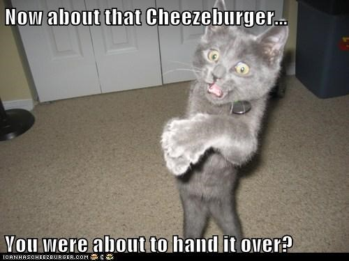 Cheezburger Image 6967051008
