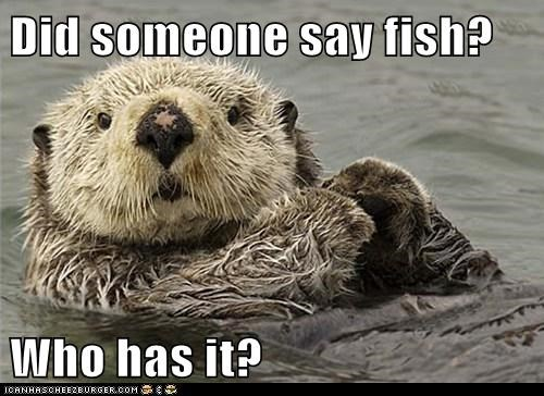 sea otters,hungry,otters,who,fish