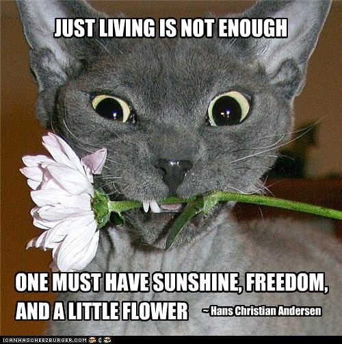 JUST LIVING IS NOT ENOUGH ONE MUST HAVE SUNSHINE, FREEDOM, ~ Hans Christian Andersen AND A LITTLE FLOWER