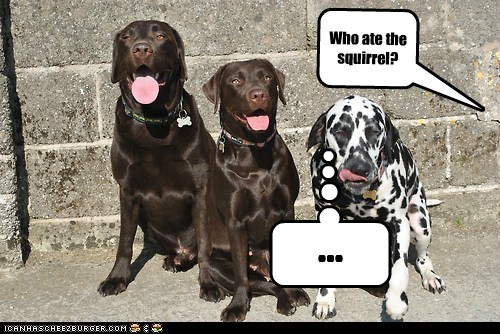 Who ate the squirrel? . . .