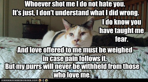 Whoever shot me I do not hate you. It's just, I don't understand what I did wrong. I do know you have taught me fear. And love offered to me must be weighed in case pain follows it. But my purrs will never be withheld from those who love me.
