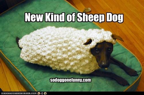 New Kind of Sheep Dog sodoggonefunny,com