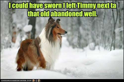 dogs collie timmy snow well lassie - 6967876352