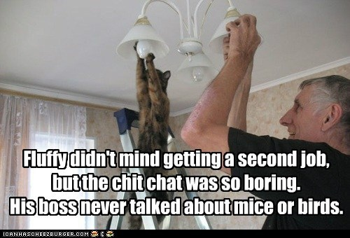 Fluffy didn't mind getting a second job,  but the chit chat was so boring.  His boss never talked about mice or birds.