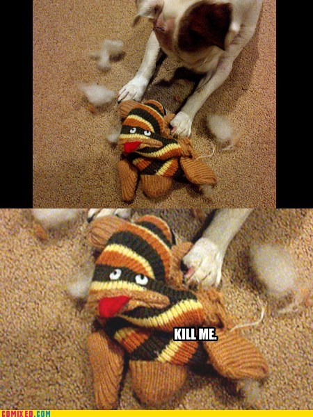kill me,sock monkey,dogs