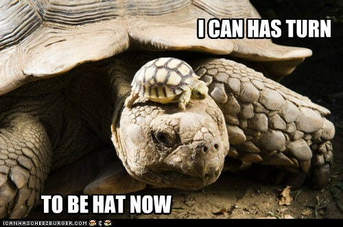 I CAN HAS TURN TO BE HAT NOW