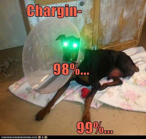 Cheezburger Image 6968337152