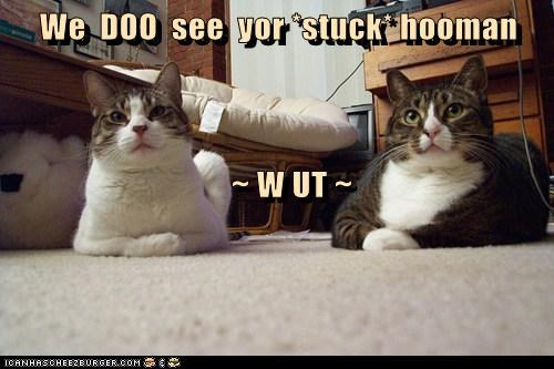 We  DOO  see  yor *stuck* hooman     ~ W UT ~