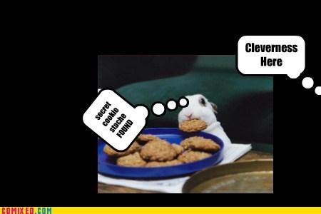 Cheezburger Image 6968498432