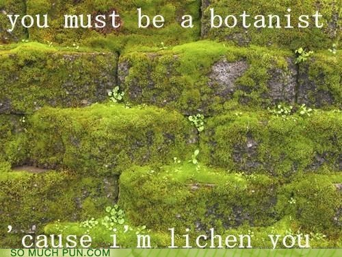 pickup line flirting lichen similar sounding botanist liking - 6968727040