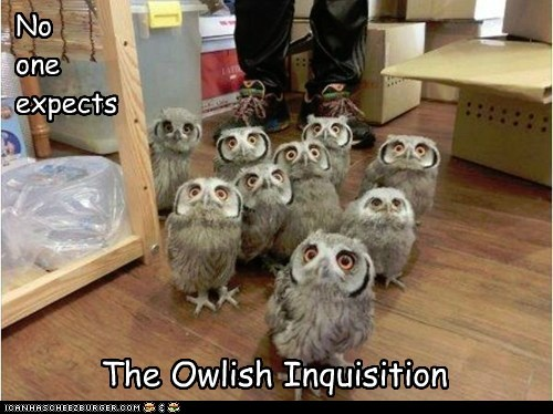 monty python reference,owls,the spanish inquisition,no one expects it