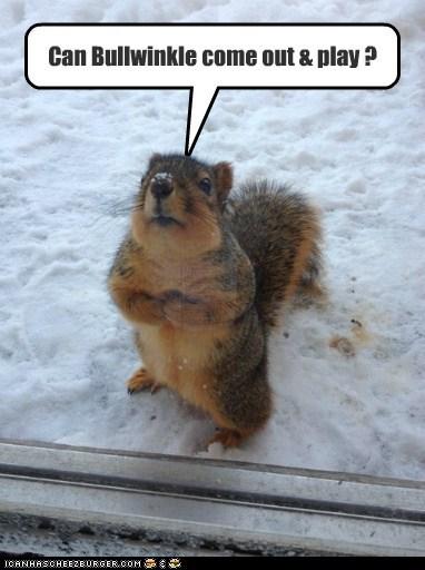 door asking snow squirrels play bullwinkle rocky - 6968910592