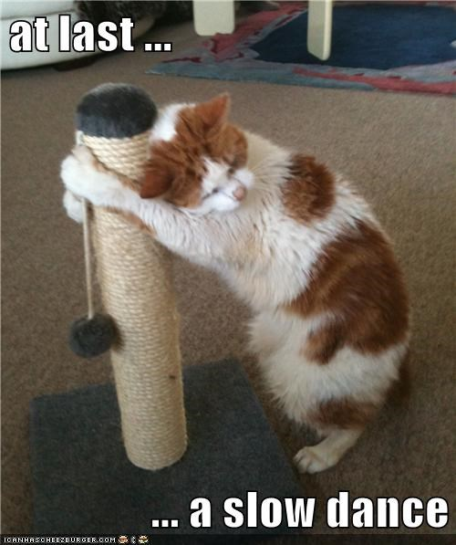 dancing cat scratching post dance funny - 6969393152