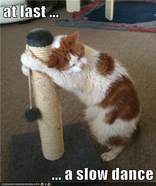 dancing cat scratching post dance funny - 6969393152