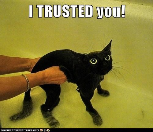 cat bath trust funny betrayal