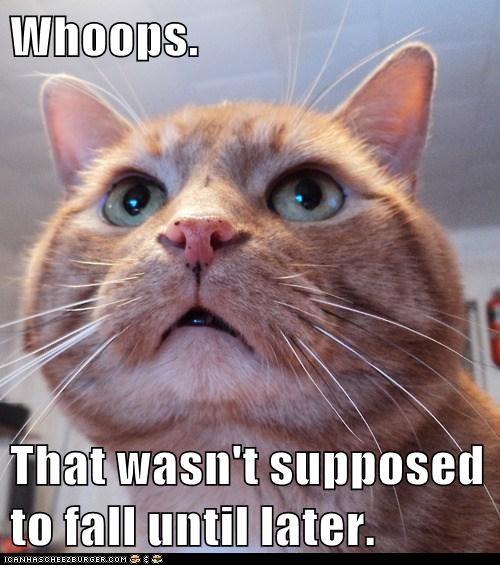 plan cat plot evil funny - 6969558016