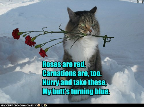 boyfriend cat snow romance flowers funny - 6969701632