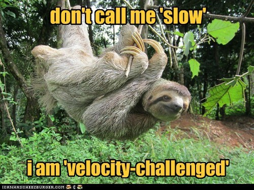 politically correct velocity sloths slow challenged Three-Toed Sloth