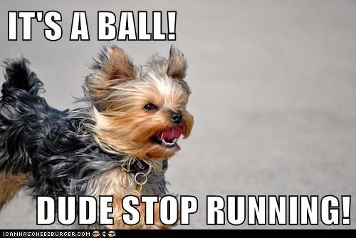 IT'S A BALL!  DUDE STOP RUNNING!