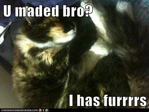 U maded bro?  I has furrrrs