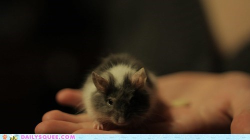 reader squee pets serious squee mouse - 6970036480