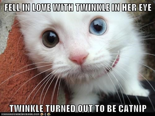 FELL IN LOVE WITH TWINKLE IN HER EYE TWINKLE TURNED OUT TO BE CATNIP
