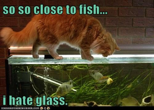so so close to fish...  i hate glass.