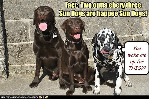 dogs sleeping in labradors grumpy Sundog dalmatians - 6970274560