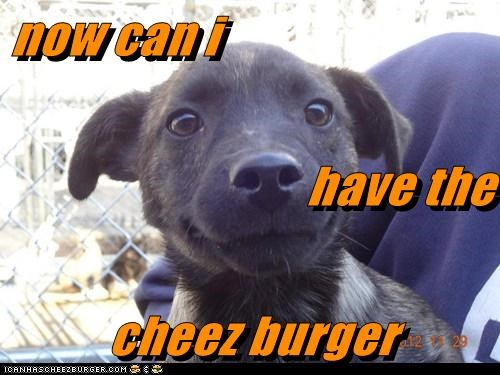 Cheezburger Image 6970568960