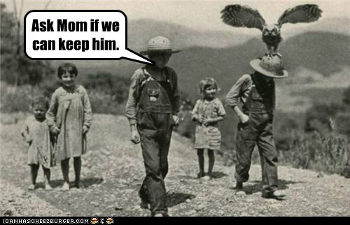 ask mom,kids,Owl,pet