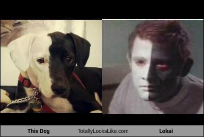 lokai TLL Star Trek dogs - 6970930944