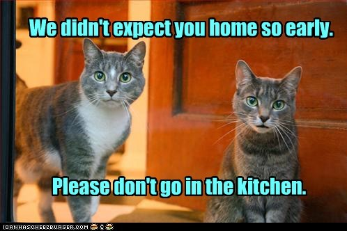 cat accident kitchen Cats funny - 6971374080