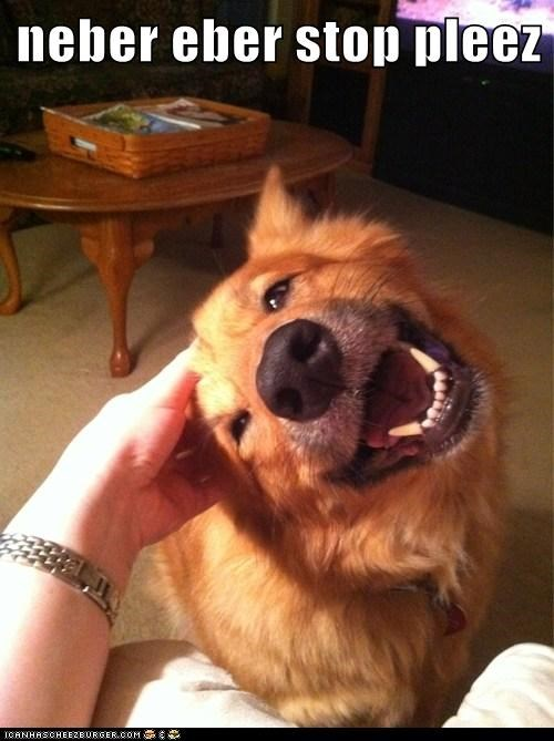 dogs,scratching,love,happy,what breed