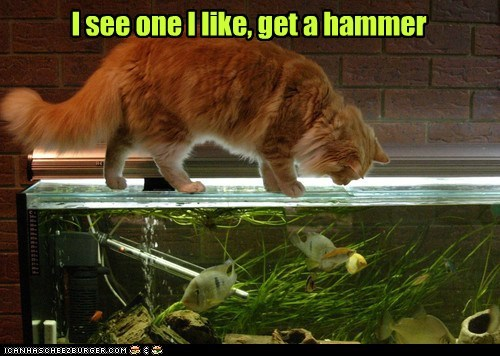 cat,food,fish,funny