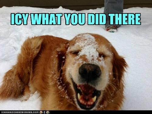 icy dogs face pun snow nose froze winter golden retriever - 6971687168
