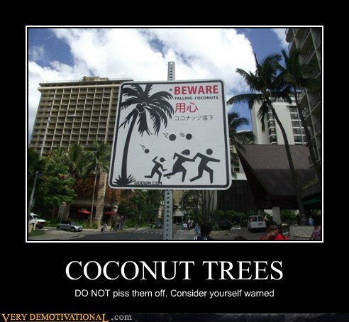 COCONUT TREES DO NOT piss them off. Consider yourself warned
