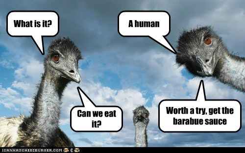 emus,Staring,human,barbecue sauce,what is it,eating