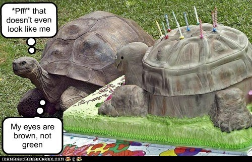 cake turtles eyes not impressed picky